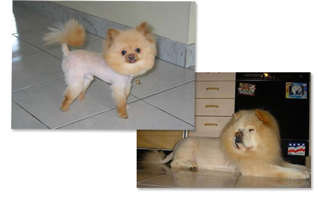 Whats In Whats Out Puppy Grooming Trends For 2013 Beauty Blitz