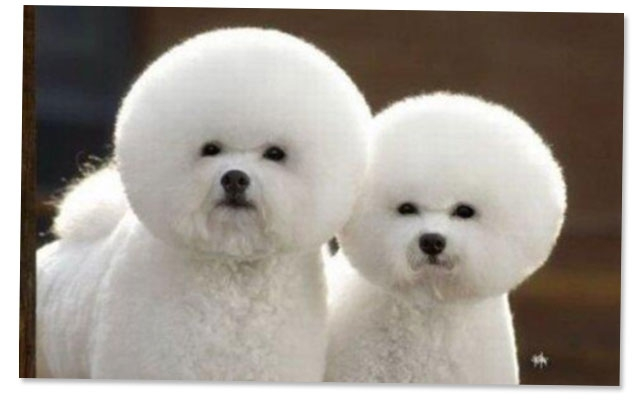 what s in what s out puppy grooming trends for 2013 beauty blitz